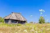 rural landscape with wooden house and birch trees, country side russia