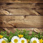 Summer Wild Flowers Edge