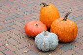 Gourd And Pumpkin
