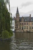 pic of weeping willow tree  - Looking past weeping willow tree Salix babylonica on the Dijver Canal with medieval buildings - JPG