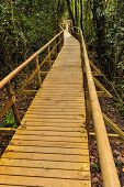 Wood Platform Trail Through The Rain Forest