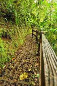 Trail In Tropical Forest With Wooden Fence