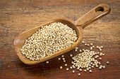 stock photo of sorghum  - a scoop of gluten free white sorghum grain against grunge wood - JPG