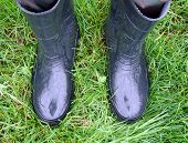stock photo of wet feet  - Feet in rubber boots on the wet grass - JPG