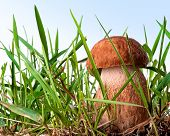 mushroom in the grass on a blue background