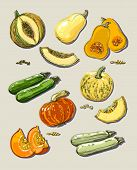 Hand drawn illustration of pumpkin and zucchini.