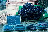 Black Seedless Grape India