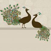 Couple Of Peacocks