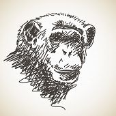 Sketch of chimpanzee head, Hand drawn vector illustration