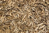 Beach Drift Wood