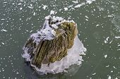 An Old Stump, Frozen In The Ice.