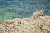 Seagull on coastal rocks.
