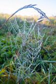 Web Of A Spider On Sunshine On A Meadow