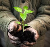 Hands holding green sapling with soil. Gardener man