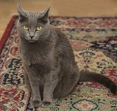 Gray Cat sitting and looking mad