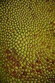 Jackfruit skin pattern