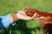 stock photo of paw  - Human hand holding dog - JPG
