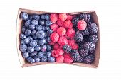 stock photo of neat  - Punnet of ripe assorted fresh autumn berries with blueberries raspberries and blackberries neatly arranged and viewed from overhead isolated on white - JPG