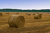 Hay Rolls In Field