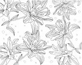pic of white lily  - beautiful contour monochrome drawing of lilies on a white background - JPG