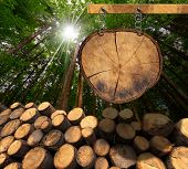 picture of cutting trees  - Trunks of trees cut and stacked and empty wooden sign a section of tree trunk hanging with metal chain on a wooden pole with green forest in the background with sun rays - JPG