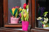 picture of flower pot  - Flowers in pots - JPG