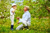 picture of grandpa  - happy grandpa with grandson blowing dandelions in spring garden - JPG