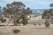 image of eucalyptus leaves  - Undulating Western Australian farmland under overcast sky with culitvation scattered forest and a foreground wandoo  - JPG