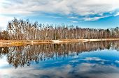 Birch Grove At The Lake