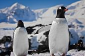 zwei Penguins träumen