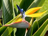 Ramat Gan Park Bird Of Paradise 2010