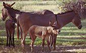 Donkey Baby Bray