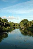 Постер, плакат: Канал в Майами с растительностью