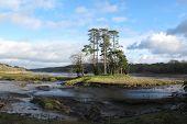 Dog Island, Slebech Park, Pembrokeshire