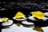 flower petals on pebbles reflection