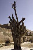 Monastery Gnarly Tree