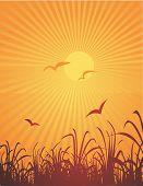 Burst Sun