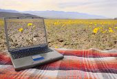pic of blue-screen-of-death  - computer with a picture of the local wildflowers on screen sitting on a blanketamid the wildflowers in Death Valley - JPG