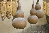 Calabash Drying To Make Instruments And Bowls