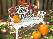 Pumpkins On A White Bench