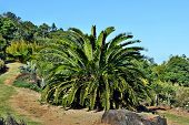Encephalartos Plant Palm Evergreen poster