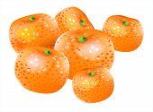 Vector mandarin