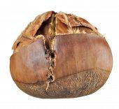 Roasted Chestnut Close-up Isolated On White Background