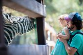 Zoo Visitors Little Girl And Her Father Feeding Zebra Through The Fence At The Petting Zoo, Close Up poster