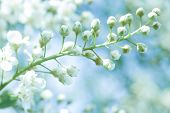 Soft Blurred Of  Spring Flowers With Soft Bokeh In Pastel Tone For Background. Beautiful Spring Natu poster