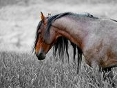 An American wild mustang. Loneliness is an unpleasant feeling in which a person (or animal) feels a strong sense of emptiness and solitude resulting from inadequate levels of social relationships.