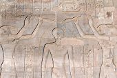 Hieroglyphs In The Temple Of Kom Ombo (egypt)