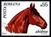 Postage stamp Romania 1970 Ghidran, Horse