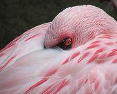 Dormir menos Flamingo