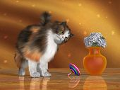 stock photo of molly  - Bella a calico cat looks at a spinning top with a quizzical expression on her face - JPG